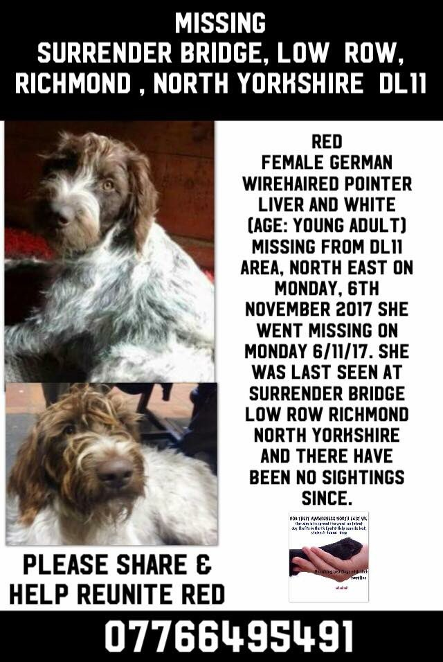 Two #pointers went #missing 7/11 one has been reunited BUT the younger of the two is #STILLMISSING #findRedpointer #Moor between #Swaledale &amp; #Arkengathdale very pale in colour liver head&amp;liver patch right rump area OWNERS WORRIED do NOT chase #LowRow #Yorkshire<br>http://pic.twitter.com/X4RlZR0BMU