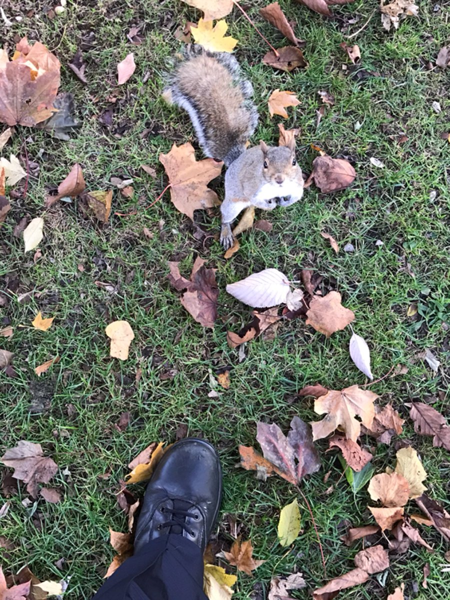 No I can&#39;t arrest the other squirrel for taking your nuts! #besafe #footpatrol with @MPSHounslowWest<br>http://pic.twitter.com/hyWOxprwSR