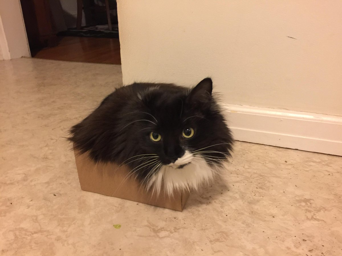Why do cats sit in boxes? The physics behind why cats like stuffing themselves in odd places