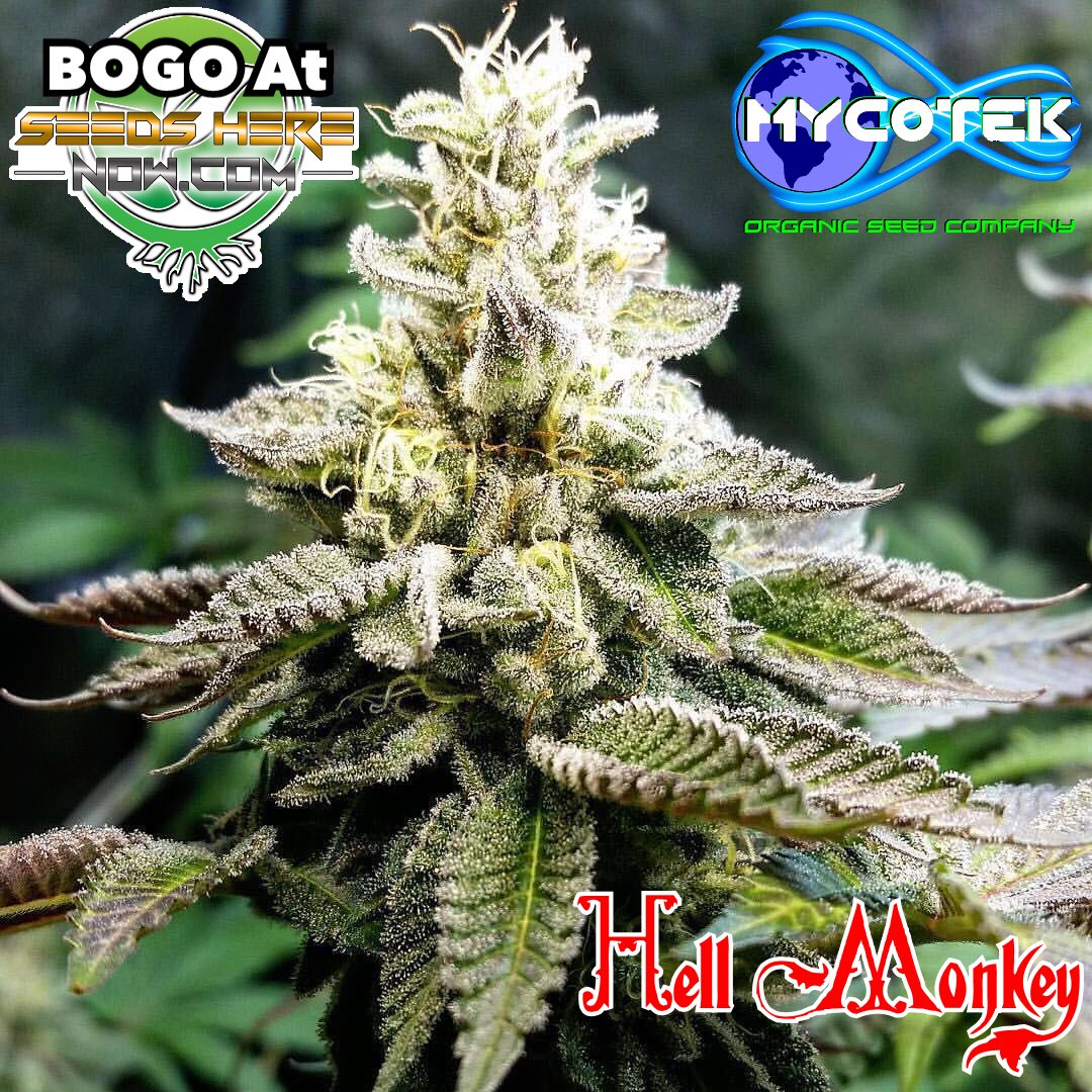 Mycotekseeds tagged Tweets and Download Twitter MP4 Videos   Twitur