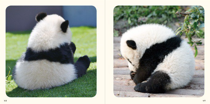 """""""パンダの赤ちゃん""""写真集が発売 - 白くてふわふわ、国内外の赤ちゃんパンダの魅力満載 fashio…"""