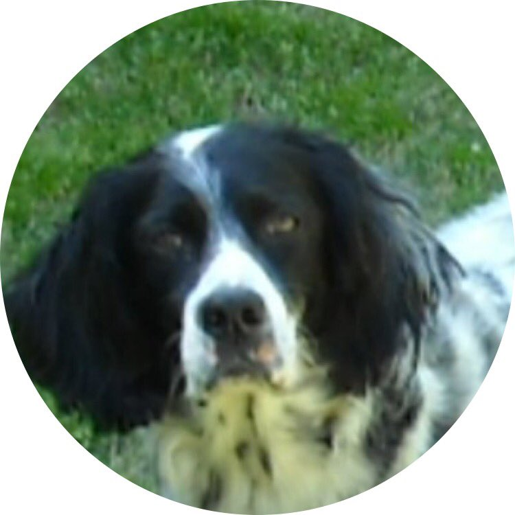 RT @Woof2017: 🍗 Have a treat, @cleo2056!  #TreatTime #DogsOfTwitter https://t.co/ZKkTS2HdCA