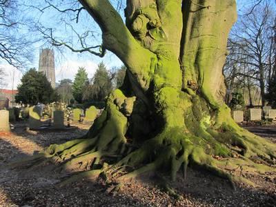 RT @bdbommel: Eén van de mooiste bomen van Gelderland staat in Zaltbommel https://t.co/q4jLkmKGJX https://t.co/OOa6ApouHu