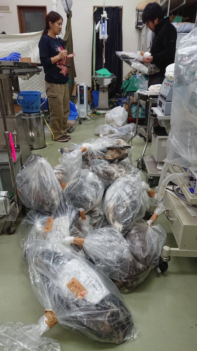 山積みにされた大きな袋。これらは全部、風力発電用の風車に衝突して死んだオジロワシだ。温室効果ガスを出…