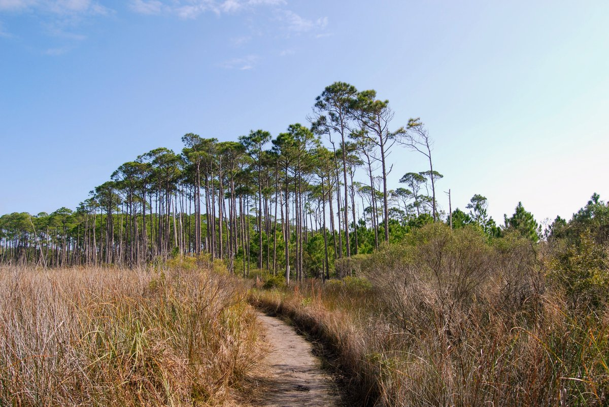 A6: Hiking. Florida has many trails for...