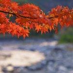 秋の色、詰め合わせ。(一昨日岐阜県にて撮影)今日もお疲れさまでした。明日もおだやかな一日になりますよ…