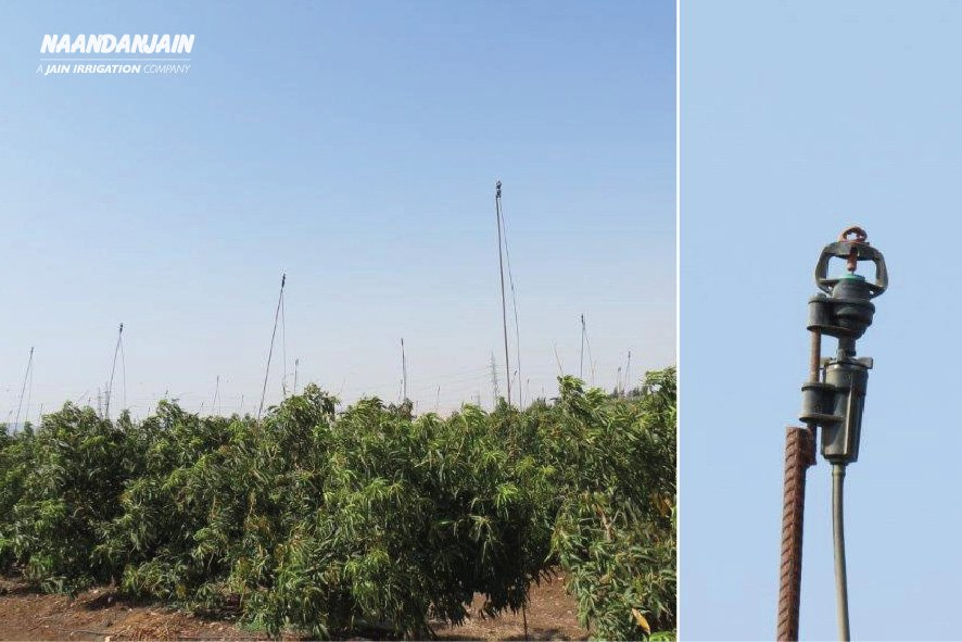 The perfect #Frost_protection solution for the sensitive  #Israeli #Mango ?   @NaanDanJain #Frost_protection_System with #pressure_compensated_micro_sprinkler_2002_Aquasmart! https: //www.facebook.com/NaanDanJain/<br>http://pic.twitter.com/FQmm7iqxIV