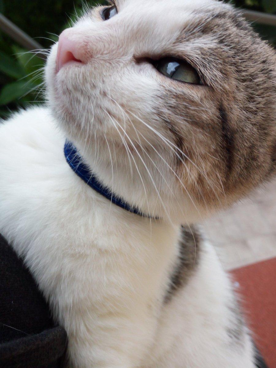 Tra le Malattie pelle gatto più fastidiose, cè lacne felina che si presenta attorno alle labbra e sul mento.