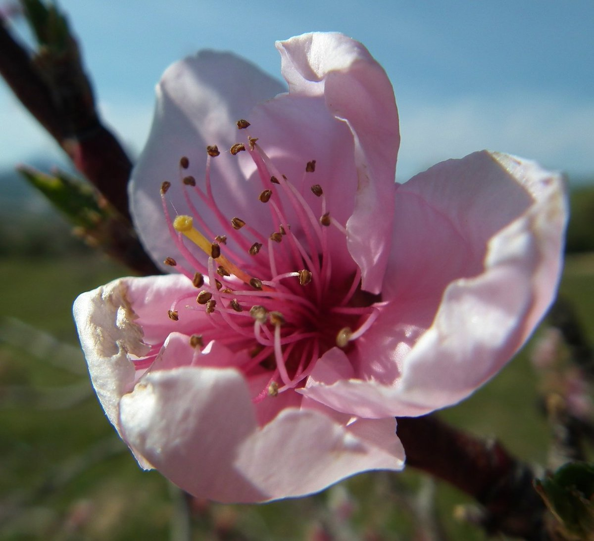 Cherry Blossom - Flowers  http:// eyesshare.co.uk/ProjectRetail/ Default/Translator.php?page=Main.html&amp;subpage=/WebRetail/Pages/Shop/CreatorProducts.html&amp;creator=3&amp;product=165&amp;app=eyes &nbsp; …  #zoom #shutter <br>http://pic.twitter.com/77CoSpsRrF