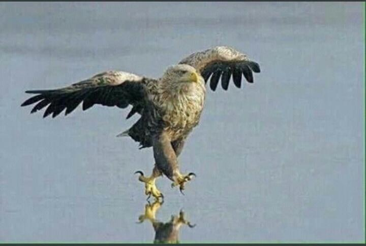 The super eagles when they come back to...