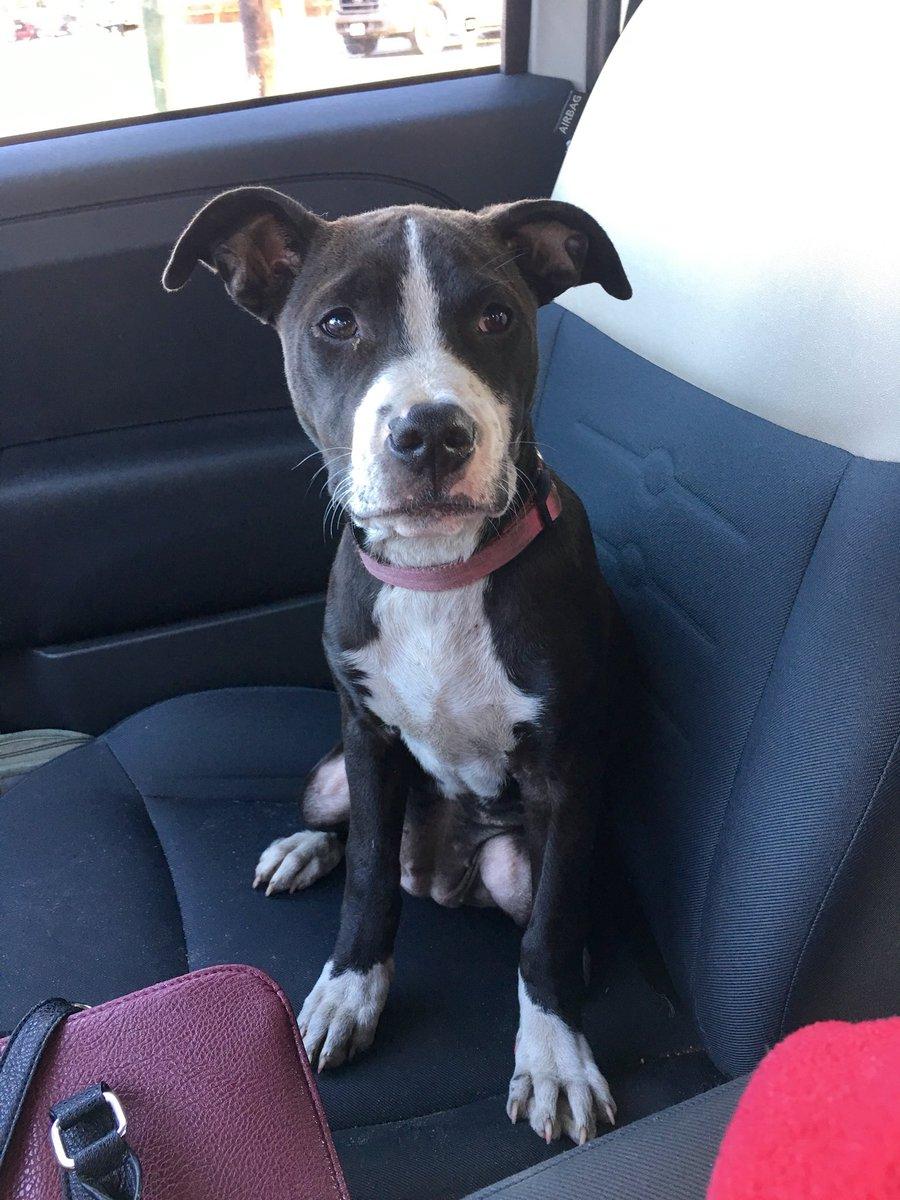 My friend found this dog in #liveoakflorida #florida #dog #missingdog #founddog #liveoak help me find her owners!!!! <br>http://pic.twitter.com/RKjPzFLSW2