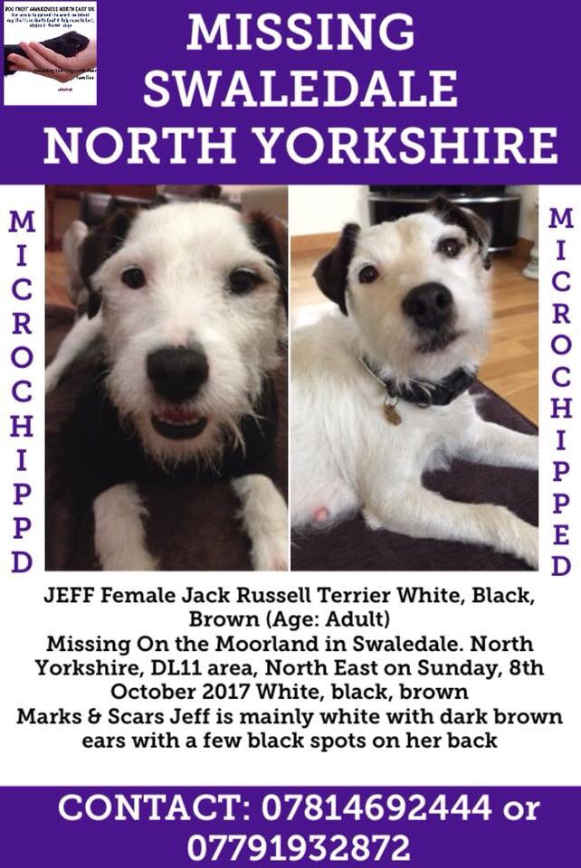 #MISSING #Swaledale #NorthYorkshire JEFF #JRT Wh/blk&amp;brown on #Moorland #DL11 #NorthEast since Sunday 8/11  She&#39;s mostly white with pretty brown ears &amp; a few black spots on back <br>http://pic.twitter.com/LuBXlZM1jD