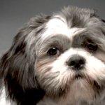Say hello to Churro doggo stories