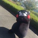 おはくま!今日も1日がんばるモーン☆ pic.twitter.com/uXzfzvX9G4