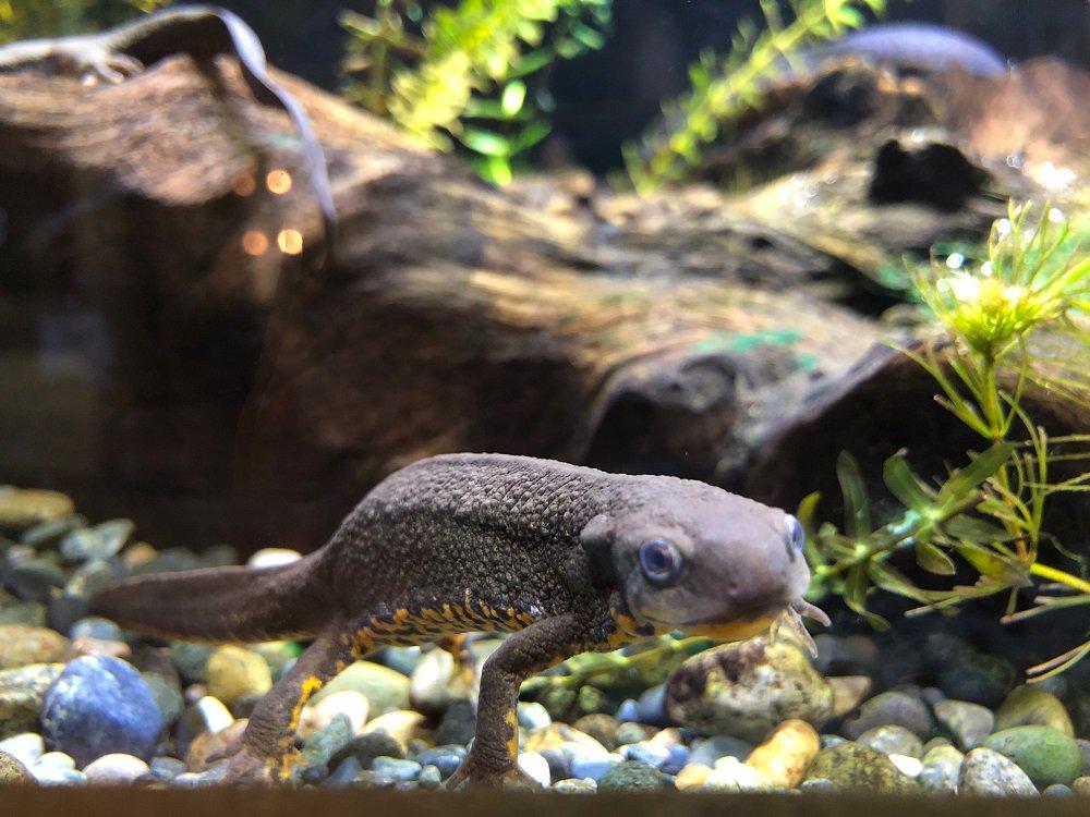 おはようございます。上野動物園開園です。 本格的に冷え込んできた今日この頃。 西園の両生は虫類館なら…