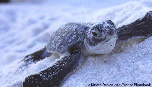 RT @OurOcean: Happy #TurtleTuesday https://t.co/vV4efiZ4it