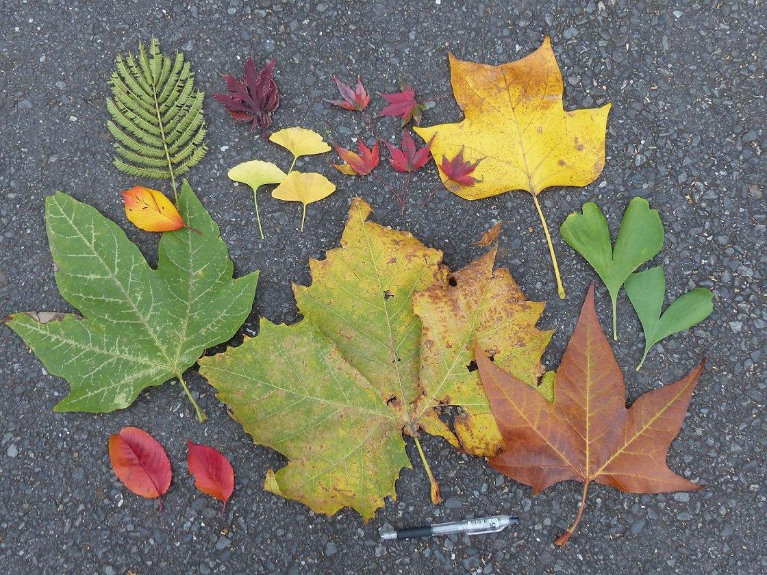 園内で ひろった秋の おとしもの。