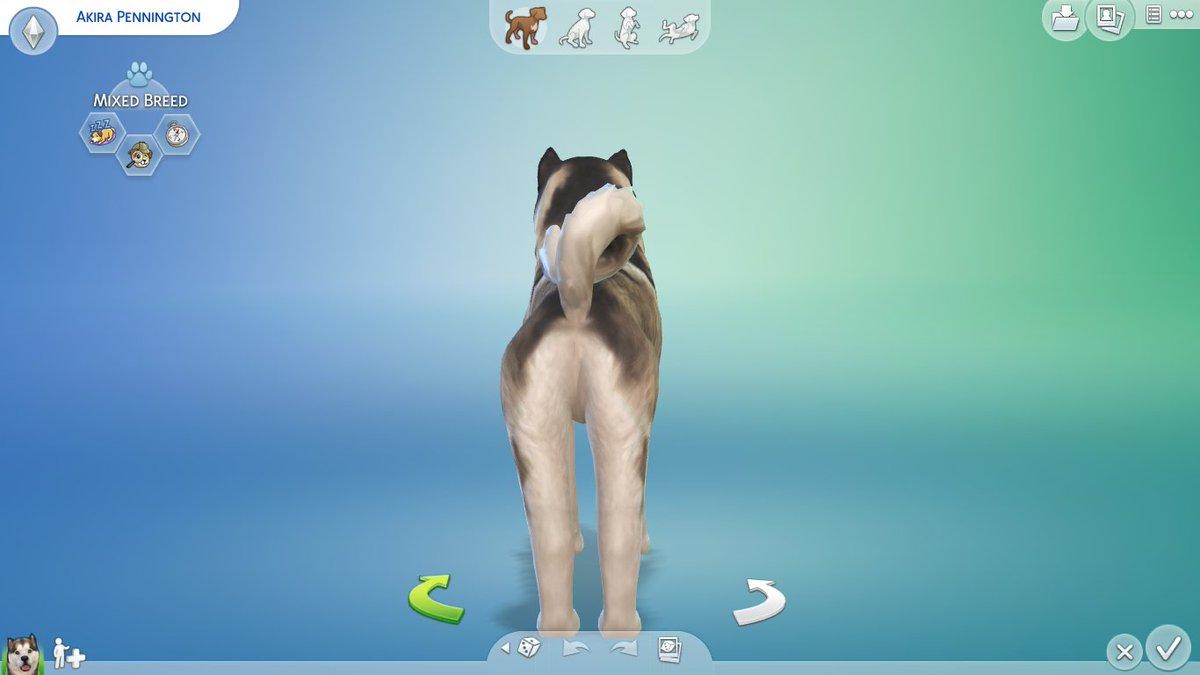 download Giant pandas : biology, veterinary