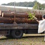 16年後…「#式年遷宮」御用材ヒノキ、おはらい #伊勢神宮 - 産経ニュース sankei.com/…