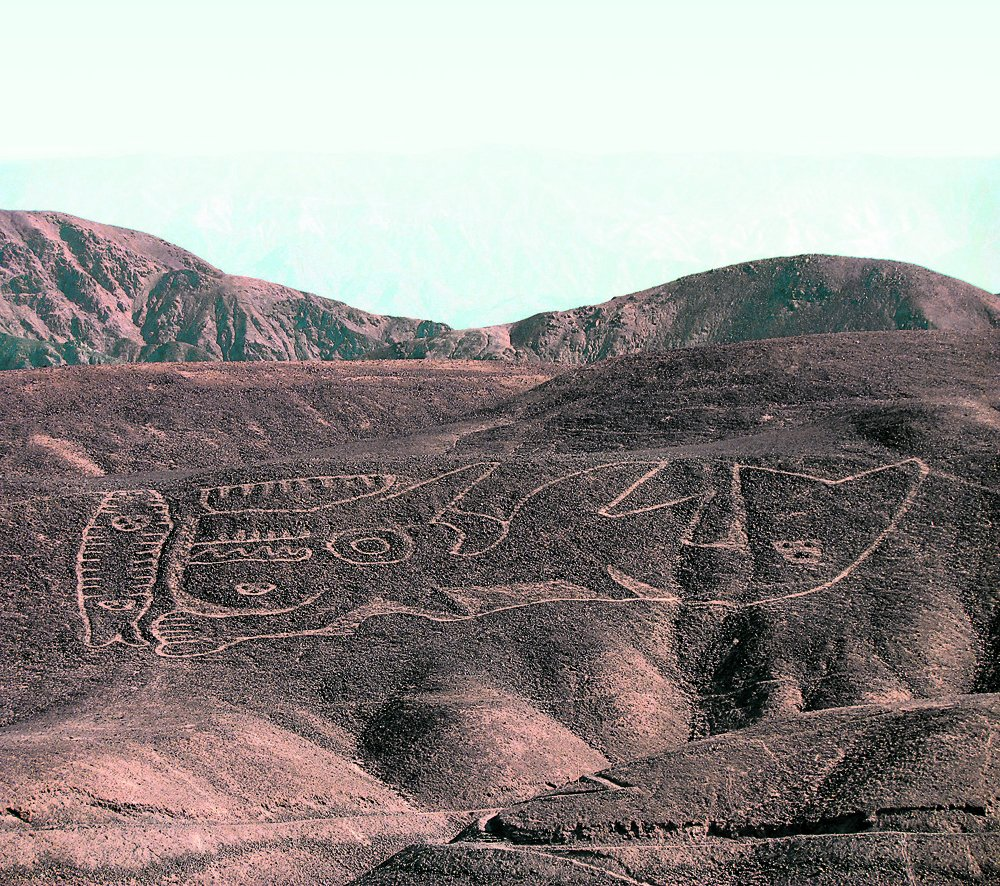 Orca geoglyph rediscovered in Peru