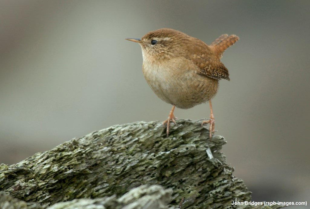 In winter, tiny birds like wrens sleep together at night for warmth. An incredible 63 wrens were once found in a single nest box! #WildlifeWednesday <br>http://pic.twitter.com/7lTPHEYS3t