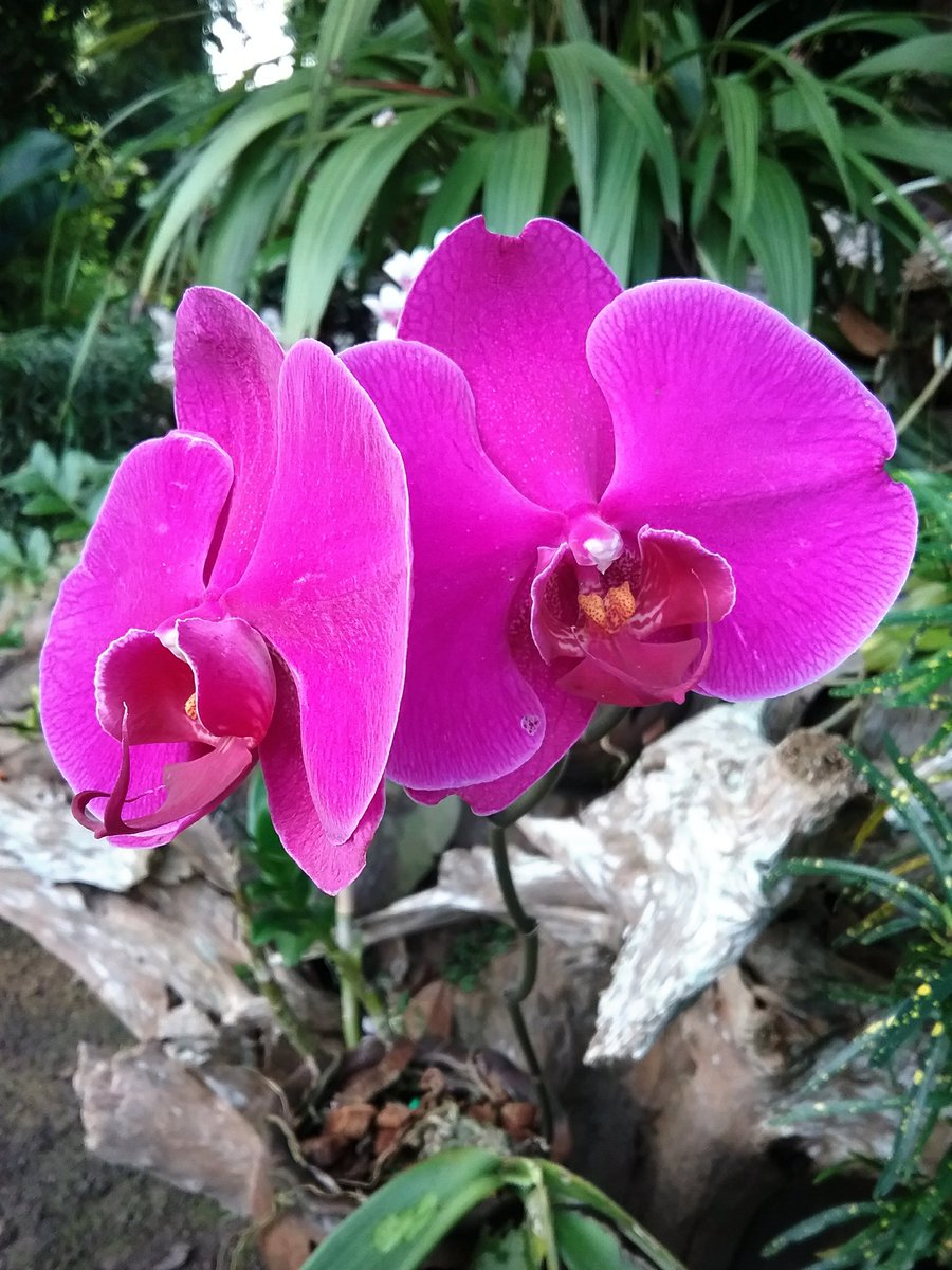 #orchid Taken from north of Thailand <br>http://pic.twitter.com/ChmPQPJbFF