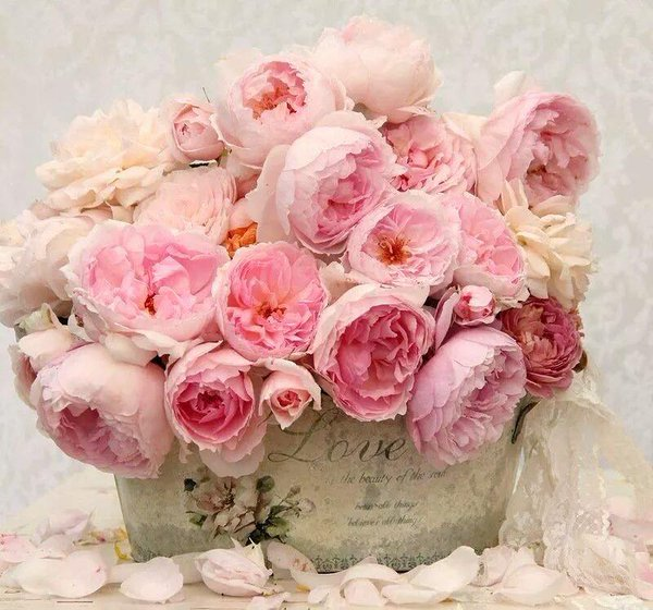 RT @gede_prama: May these flowers remind u that u're beautiful heart #JoyTrain Pic: @marizulca https://t.co/w5yGPqTvWv