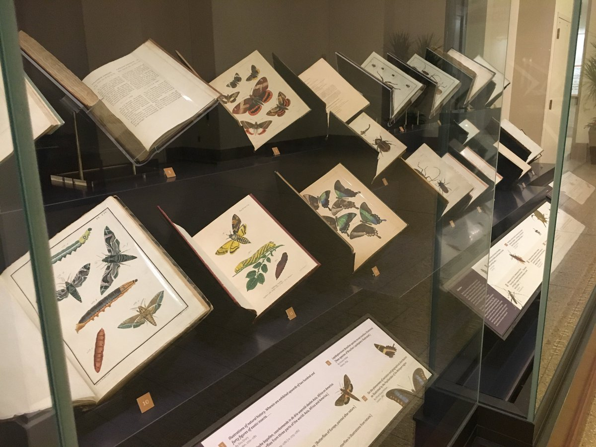 @SDNHM , we're exited about your new exhibit! We also love using exhibitions to showcase rarely-seen works. Like these natural history texts, still important to entomological research today: https://t.co/iba7a0POXI #Unshelved #DazzlingDiversity