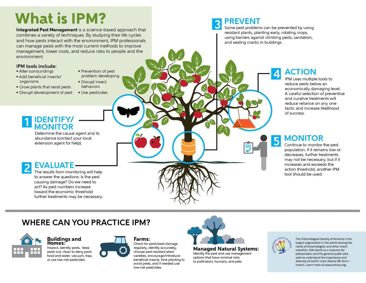 Need help explaining integrated pest management? Try using the new illustrated infographic from @EntsocAmerica #IPM  https:// buff.ly/2mupnP1  &nbsp;  <br>http://pic.twitter.com/HpuOx0XY5P