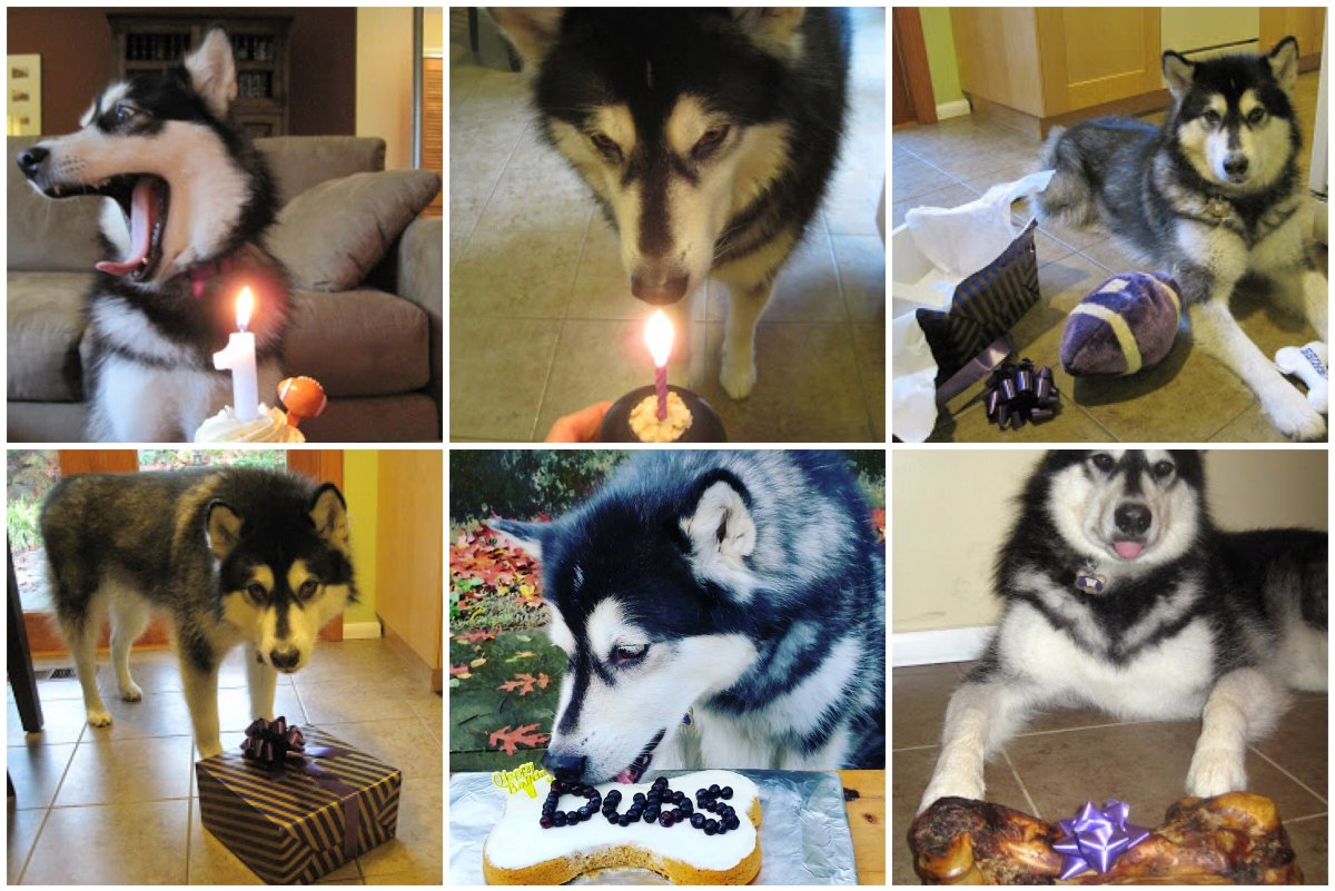 university of washington on twitter happy birthday to our beloved