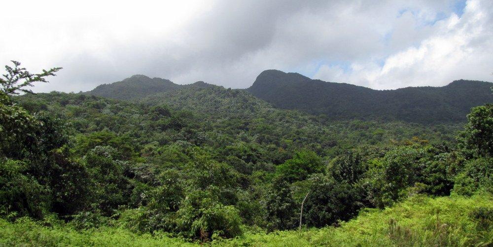RT @PRDayTrips: El Yunque's Toro Peak #PuertoRico #EstaEsMiIsla #PicOfTheDay #potd #ttot https://t.co/Xo12h10KpM