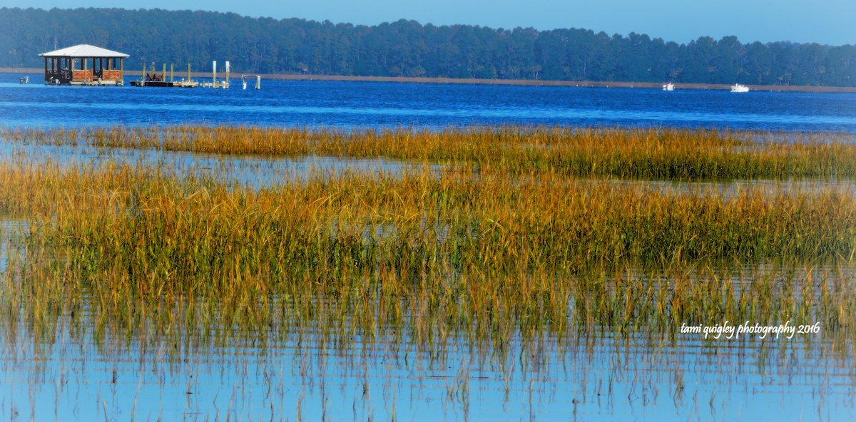 Good #Morning #Dixie  https:// tami-quigley.pixels.com/featured/good- morning-dixie-tami-quigley.html &nbsp; …  #ThursdayThoughts #art #gallery #TheSouth #prints #ChristmasGifts #canvasprints #metalprints #framedprints #greetingcards #homedecor #lowcountrylife #lowcountry #BeaufortCounty #Bluffton #SC #SouthCarolina #LehighValley #CoffeeMugs<br>http://pic.twitter.com/pVaKoDWofT