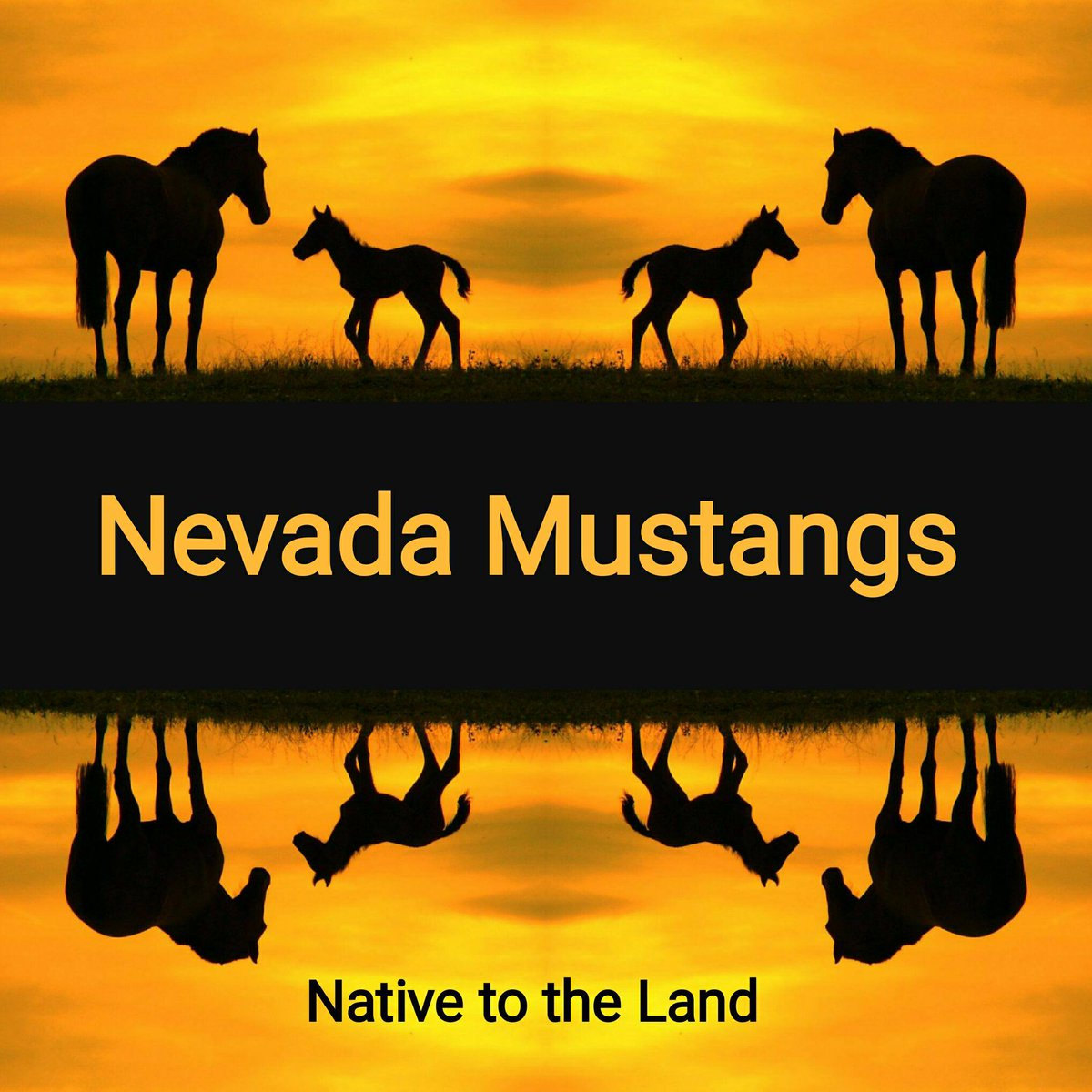 #Blm rounding up 90% #wildhorses on 1 hma.  Only 500 horses to 50,000 acres.  This does not constitute overpopulation.  @friendsofanimals @ awhc pls help. Litigation works <br>http://pic.twitter.com/WKarvHk89n