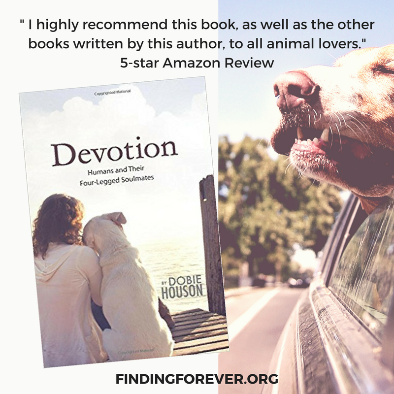 If you love animals, you'll love this heartwarming #book!!! Every purchase raises funds for #rescues!!   #rescue  #animalcommunication #love #devotion