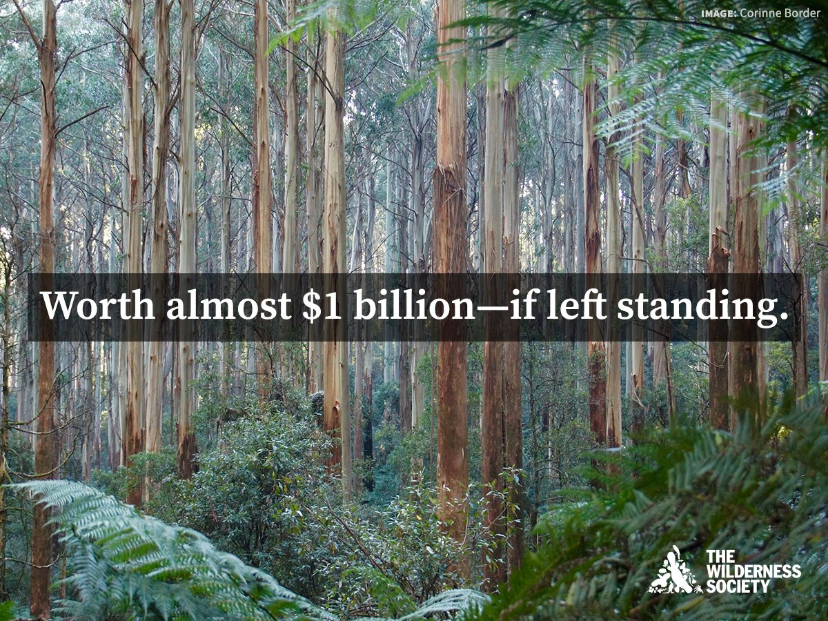 Valuing these #forests by creating the @GreatForestNP is good economic sense. But @VictorianLabor continues to sit on their hands.  Read more:  http:// bit.ly/2yghChK  &nbsp;   #springst<br>http://pic.twitter.com/yXZshVGQiB