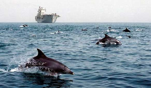 Ship noise may impact dolphins up to 2km away, study shows.  https:// goo.gl/4hXxDn  &nbsp;   Pic: AAS #dolphins #noisepollution #conservation #bioacoustics<br>http://pic.twitter.com/7gGPdpcNWg