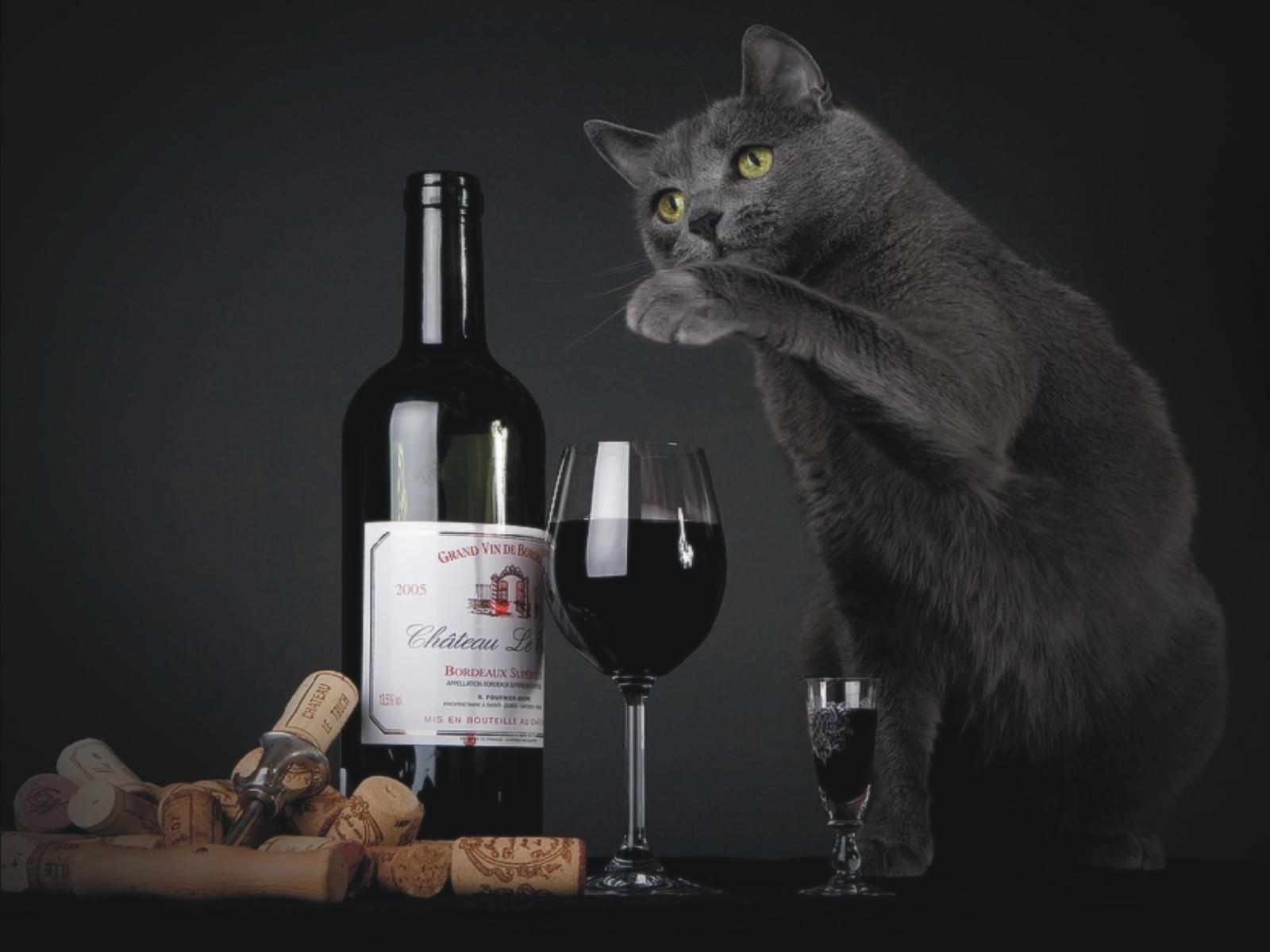 Днем рождения, картинка с бокалом вина прикольная