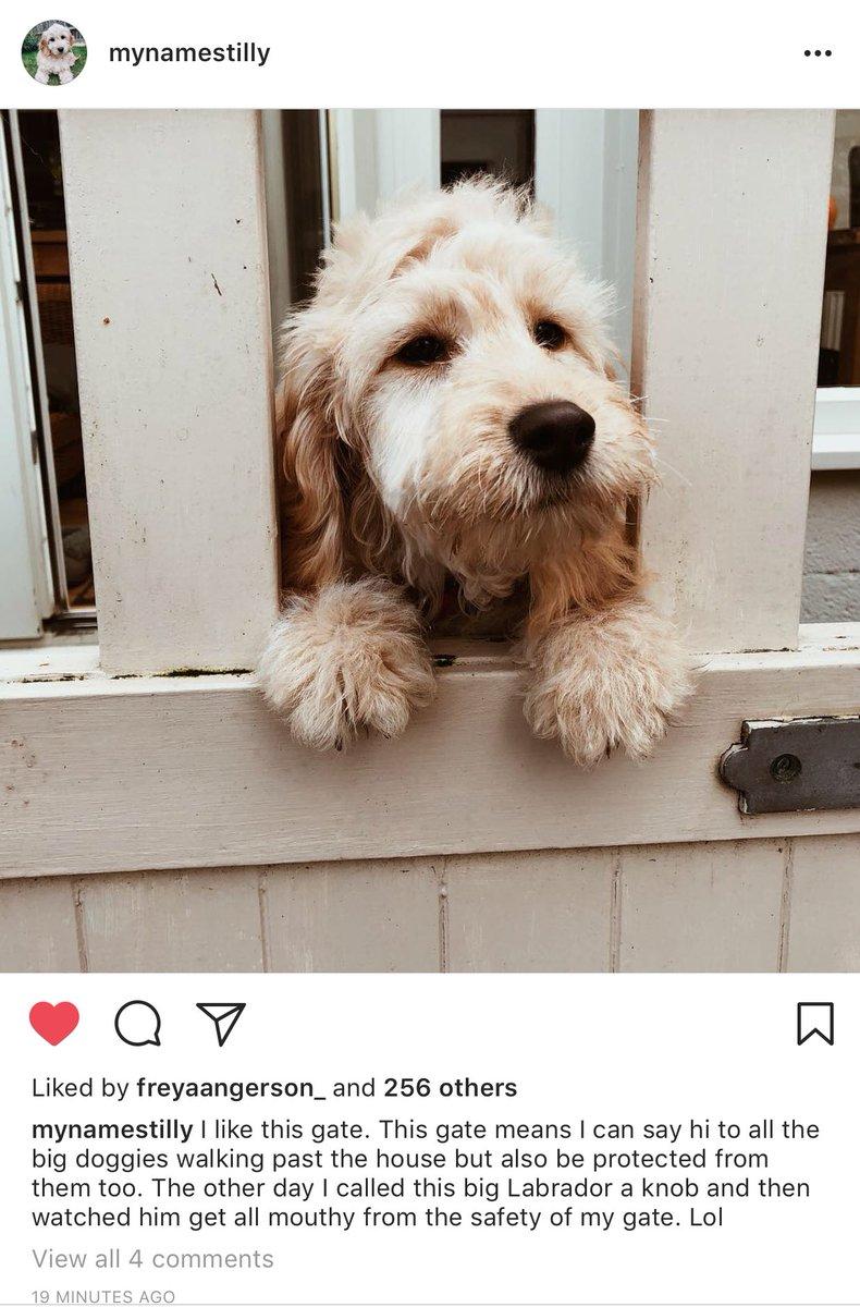 Ebony Day On Twitter Not Gunna Lie Writing Tillys Instagram