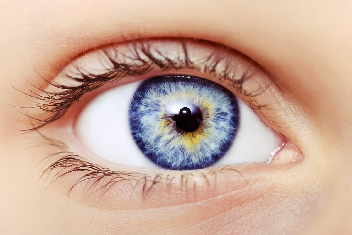 Fun Fact! Did you know blue-eyed people share a common ancestor with every other blue-eyed person in the world?  #eyesight #vision<br>http://pic.twitter.com/JYl2C0VxI4
