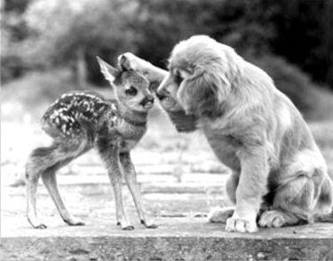 The gentleness of a dog is truly divine. #dogsarelove <br>http://pic.twitter.com/Z3QpfhxzYw