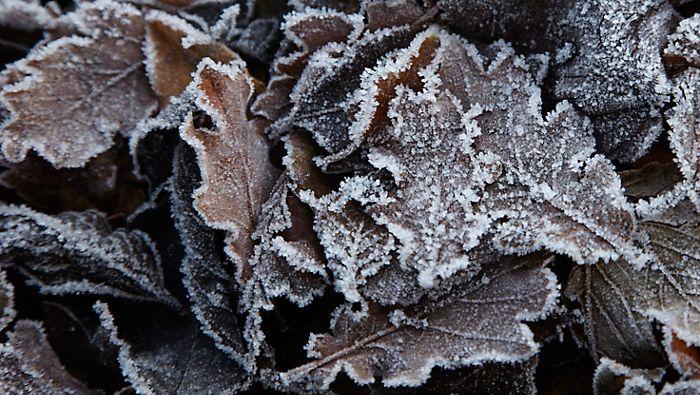 Winter gardening ideas: Things to do in November &amp; December:  https:// goo.gl/4HezBQ  &nbsp;   #Gardening #TheTradesHub <br>http://pic.twitter.com/n9bMPnWFat