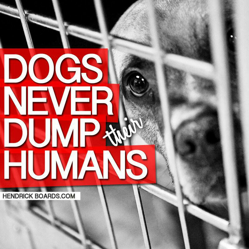 Our shelters are full. Why? Bc &quot;families&quot; are dumping their #dogs for a more convenient #Christmas. This is a death sentence more often than not. MORE than 1 in every 2 dumped dogs are euthanized in shelters #DogsofTwitter #DogMom #DogDad #DogLover #ShelterDog #RescueDog<br>http://pic.twitter.com/22bYAknPzU