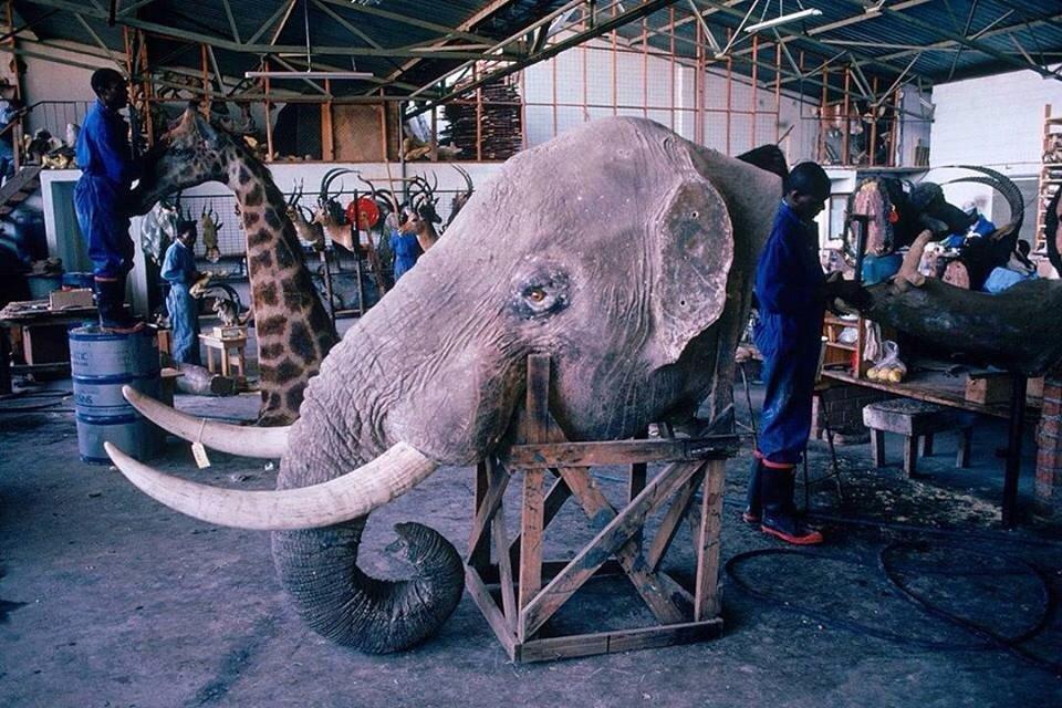 Жареный слон картинки