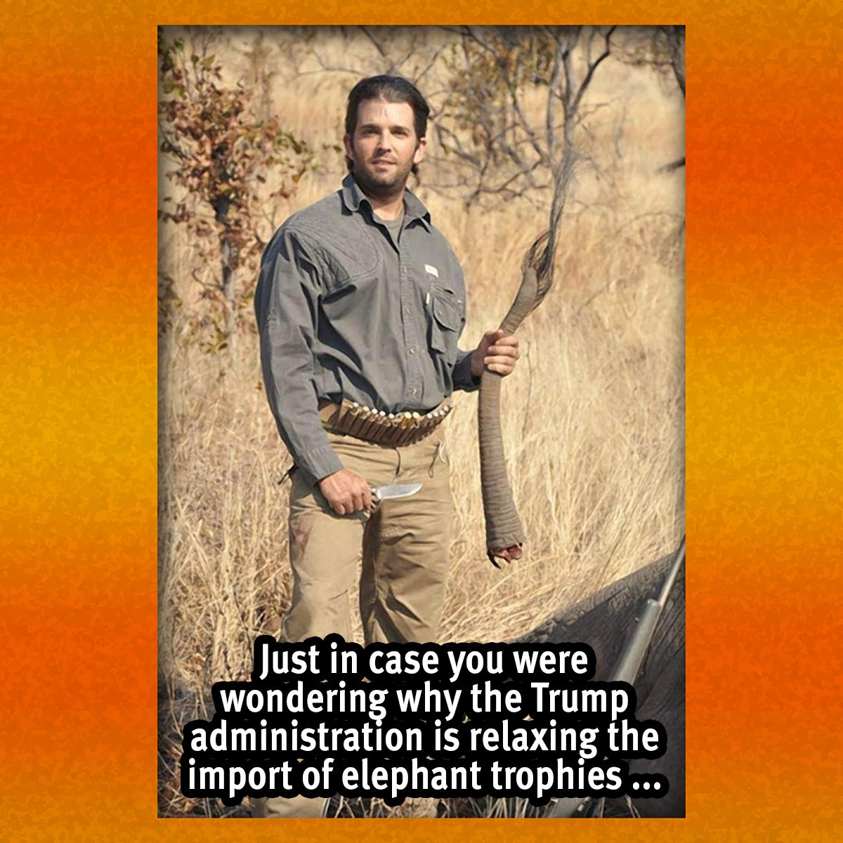 While this coward watched his friends go to war to protect his family's wealth he went to Africa to shoot defenceless elephants from a safe distance #TheRealDonalTrump #Trump @POTUS #Resist #TheResistance #IvankaTrump #MAGA