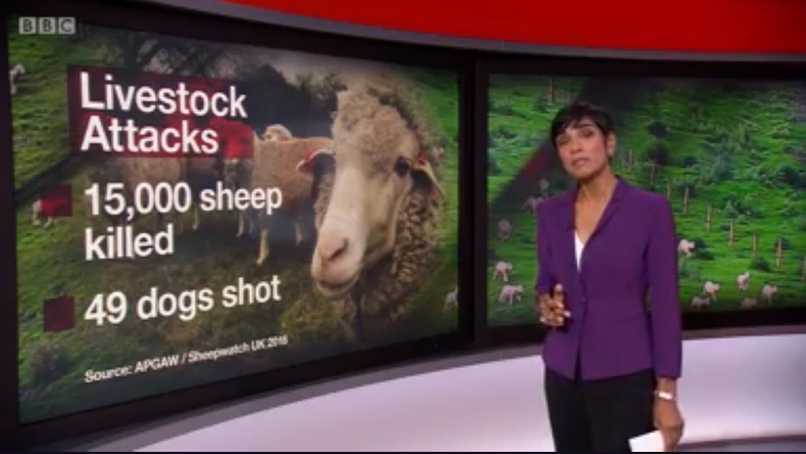 Report at 16.22  https://www. bbc.co.uk/iplayer/episod e/b09dy4rh/bbc-news-at-six-16112017 &nbsp; …  #sheep365 @CSide_Watch @NWPRuralCrime @Farmers4Britain<br>http://pic.twitter.com/TEKRPtoq1P