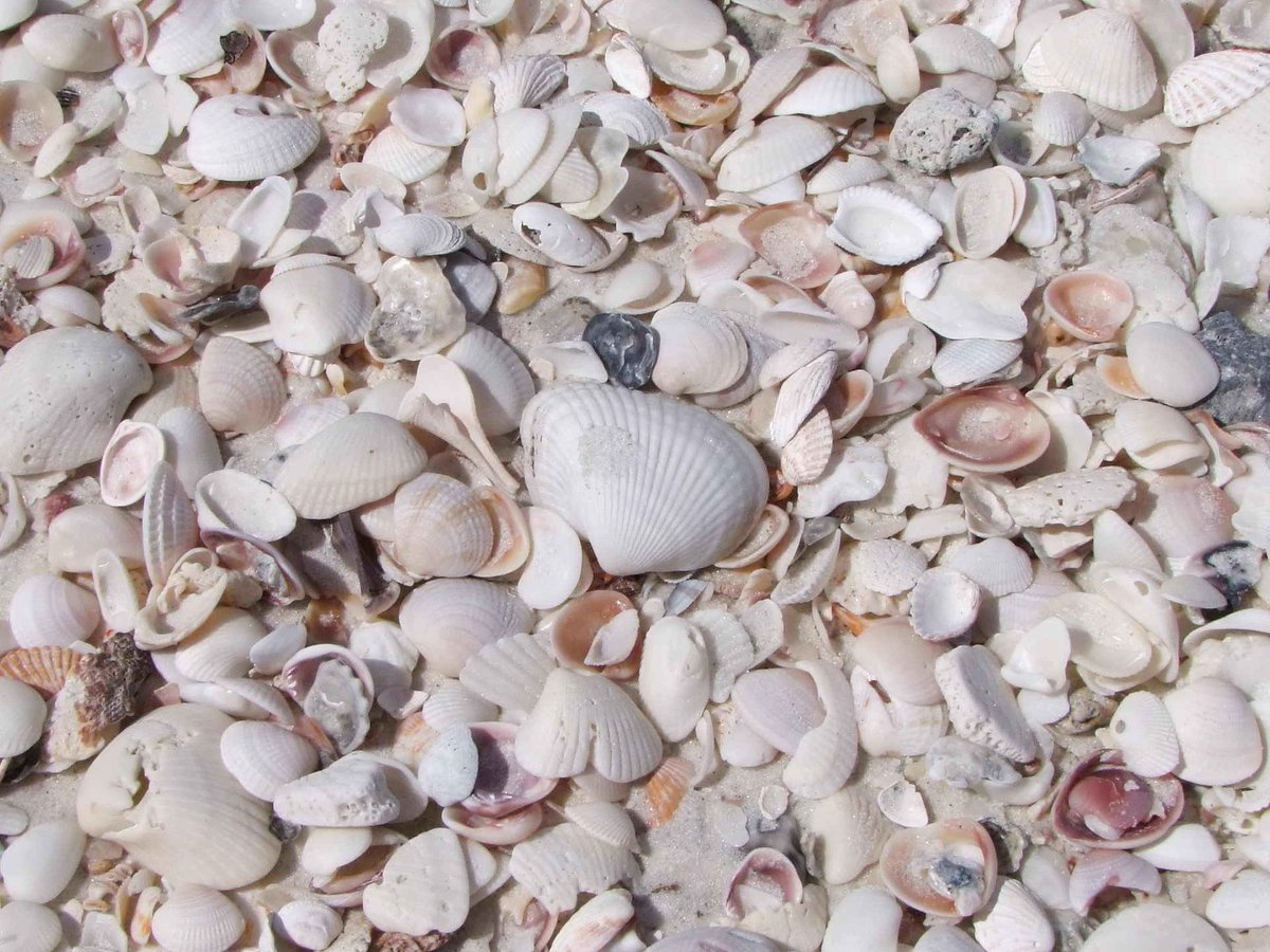 Seashells - Objects  http:// eyesshare.co.uk/ProjectRetail/ Default/Translator.php?page=Main.html&amp;subpage=/WebRetail/Pages/Shop/CreatorProducts.html&amp;creator=11&amp;product=249&amp;app=eyes &nbsp; …  #minimal #shutter <br>http://pic.twitter.com/rKDz5jcuHn