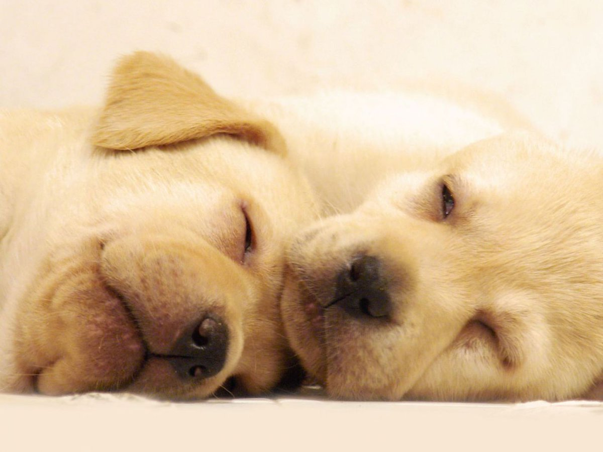 Bedtime for these babies! #Goodnight #Bedtime #Puppies #Cute #DogsofTwitter #DogMom #DogDad #Dogs #Dog #DogLover <br>http://pic.twitter.com/PvJdhekqLu