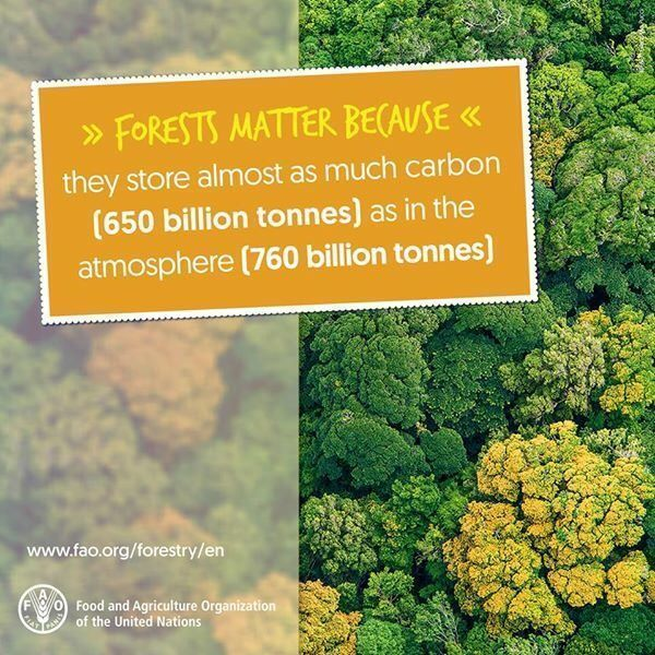 #DYK #Forests store nearly as much carbon as there is in the atmosphere? #climatechange #COP23<br>http://pic.twitter.com/nfULCXn5Yt