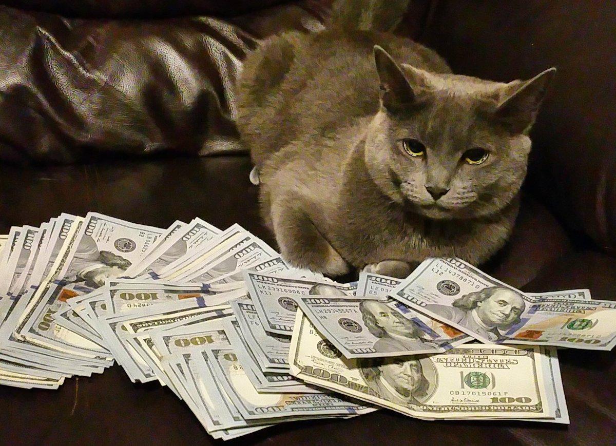 Hasil gambar untuk cat spending money