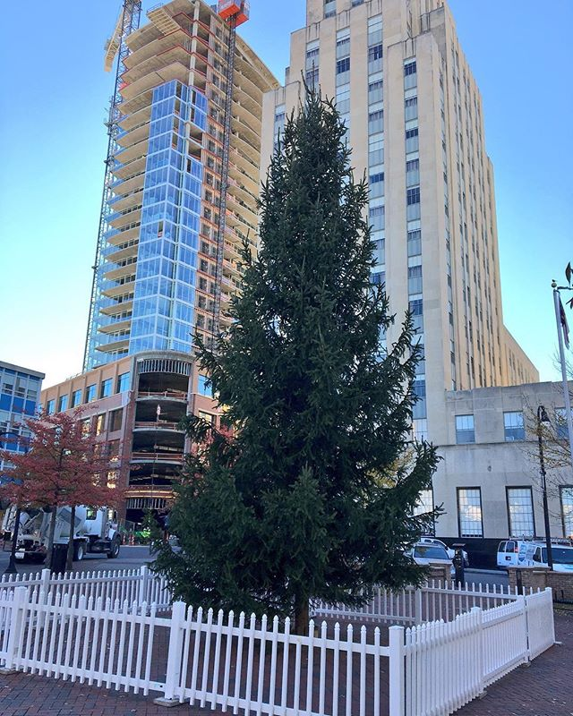 One City Center On Twitter The Tree Is Up And Ready To Bring